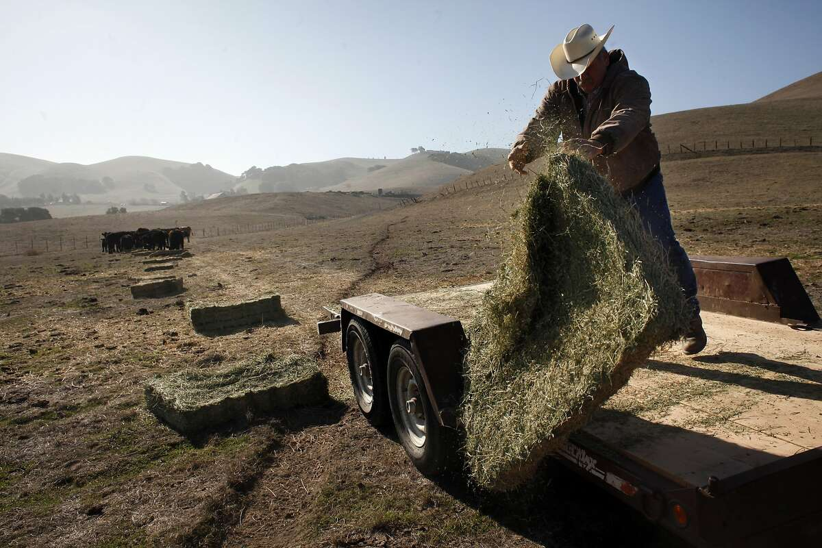 Rancher Frank Imhof puts out hay for his cattle.