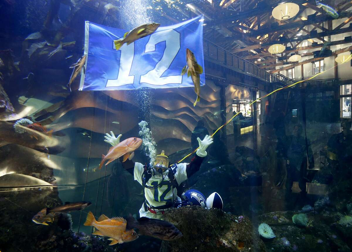 Nicole Killebrew, a diver at the Seattle Aquarium, wears a Seattle Seahawks NFL football No. 12 jersey and as she dives near a 12th Man flag in a large interactive marine life display Friday, Jan. 17, 2014, in Seattle. The Seahawks will play the San Francisco 49ers on Sunday for the NFC championship in Seattle, and the aquarium was one of many locations around the city promoting the game. (AP Photo/Ted S. Warren)