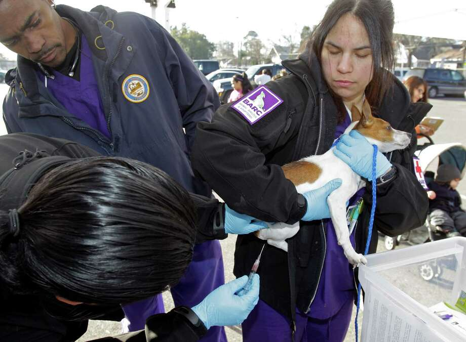 Dr. Tony S. Malone with BARC, top left, assists as BARC vet technician Beatrice Nelson, right, holds a dog named Savannah as BARC vet technician Ignacio Betancourt, lower left, gives the dog a free rabies vaccination during the Healthy Pets Healthy Streets Initiative. Photo: Melissa Phillip, Houston Chronicle / © 2014  Houston Chronicle