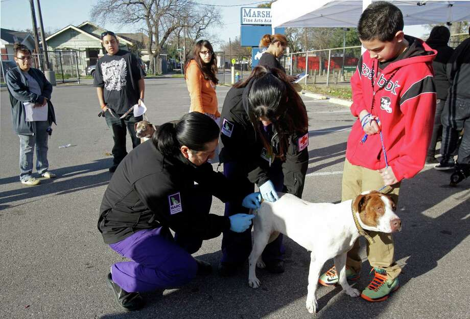 Javier Galvan, 13, right, watches as his dog, Killer, is given a free rabies vaccination by BARC vet technicians Ignacio Betancourt, left, and Beatrice Nelson, center, during the Healthy Pets Healthy Streets Initiative sponsored by BARC and other partners at John Marshall Middle School. Photo: Melissa Phillip, Houston Chronicle / © 2014  Houston Chronicle