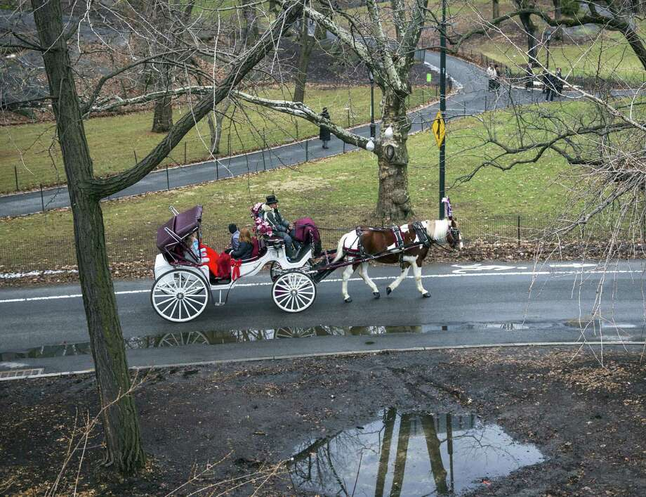 Teddy, an 11-year-old Percheron-cross draft horse, and the carriage he pulls will no longer be part of a visit to Central Park if New York's new mayor has his way. Photo: Damon Winter / New York Times / NYTNS