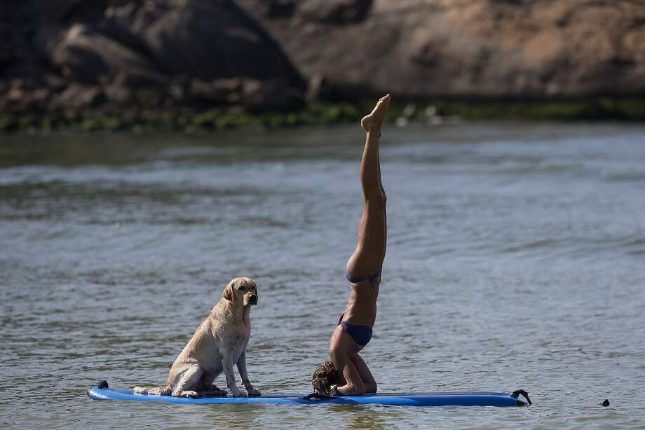 Dog paddle:Cecilia Canetti does a yoga head stand on her paddle board as her Lab, Polo, watches off Barra de Tijuca beach in Rio de Janeiro. Photo: Silvia Izquierdo, Associated Press