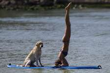 In this Thursday, Jan. 16, 2014 photo, Cecilia Canetti practices yoga on a stand-up paddle board as her dog Polo accompanies her off Barra de Tijuca beach in Rio de Janeiro, Brazil. Canetti is training her dog to accompany her as she stand-up paddle surfs, along with other paddle surfing dog owners preparing for an upcoming competition of paddle surfers who compete with their dogs.