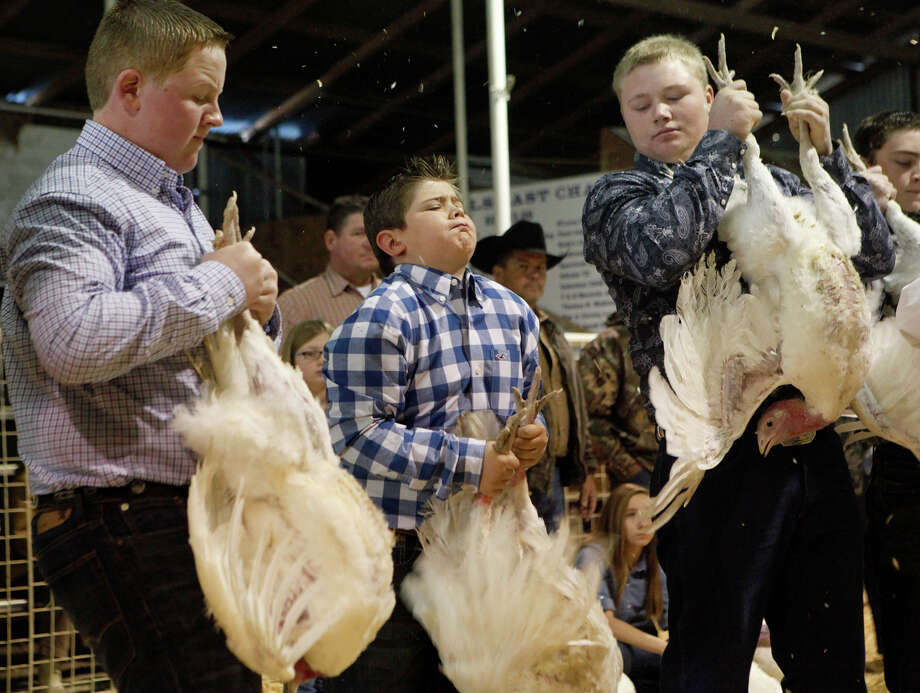 Chase Sandstrom (middle), 11, tries to keep control of his turkey hen as it starts to flap its wings during the judging at the 41st annual Walter Gerlach Livestock Show at the Gerlach Show Barn off of Babcock Road. Chase left the arena winning third place for his turkey. In all there were 28 turkeys that were shown on Monday. Photo: Cynthia Esparza, For The San Antonio Express-News / For the San Antonio Express-News