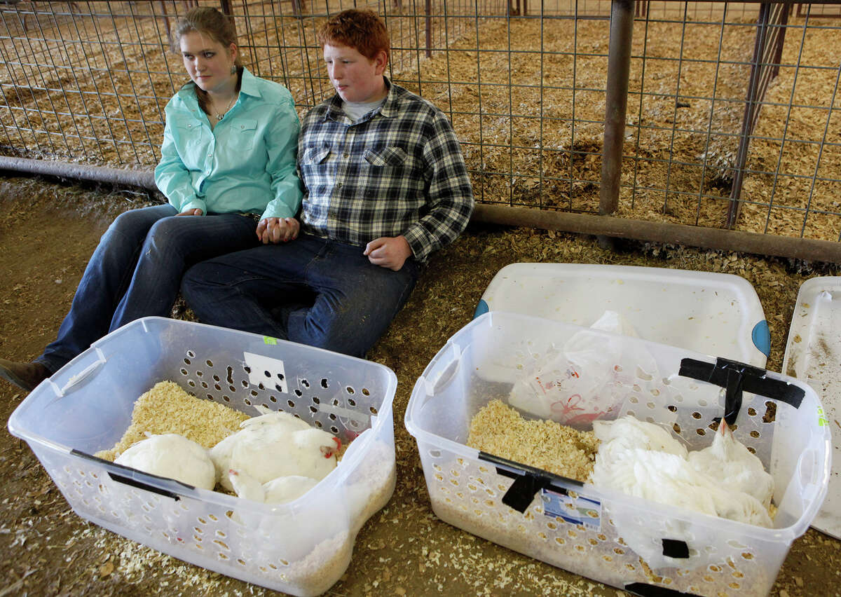 Kyle Greeley, 15, and Katelyn James, 15, sit next to some chickens Kyle had finished showing Monday, Jan. 20, 2014, at the 41st annual Walter Gerlach Livestock Show.