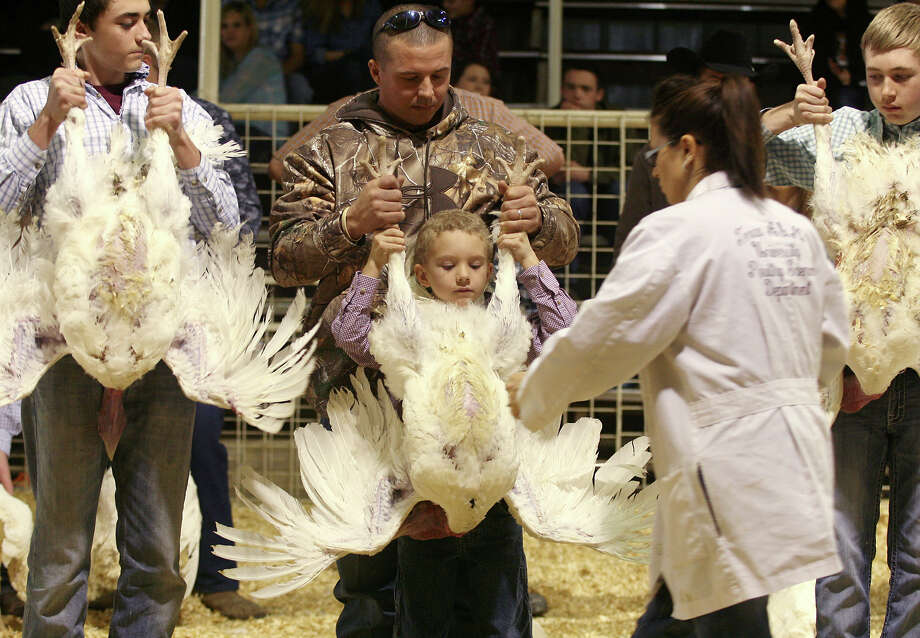 Bo Schott (center), 8, gets help from his father Luke as the poultry judge comes to look at his turkey tom Monday, Jan. 20, 2014, during the 41st annual Walter Gerlach Livestock Show at the Gerlach Show Barn off of Babcock Road. This is the first year Bo has shown animals and he left winning fifth place for his tom. In all there were 28 turkeys that were shown on Monday. Photo: Cynthia Esparza, For The San Antonio Express-News / For the San Antonio Express-News