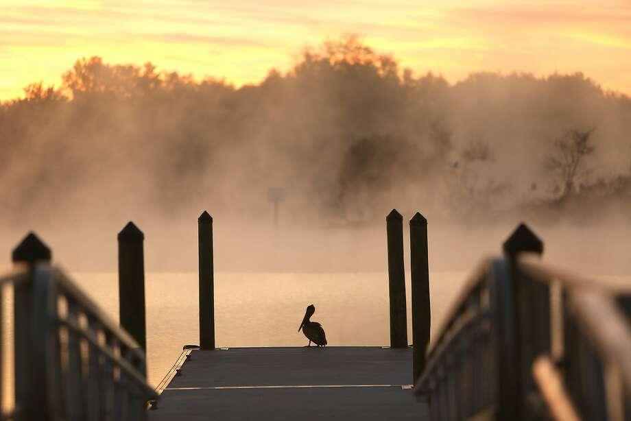 A lone pelicansits on a dock at Edward Medard Reservoir on a foggy morning in Hillsborough County, Fla. Photo: Skip O'Rourke, Associated Press