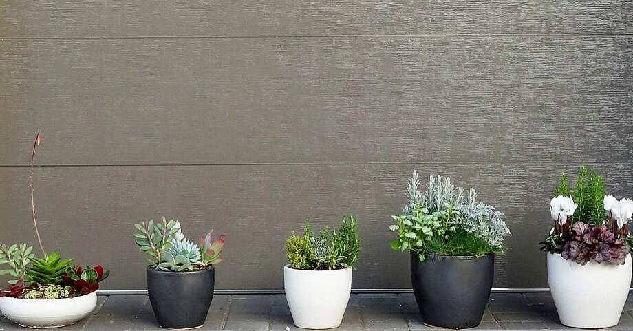 Crate & Bloom sends its customers easy-to-grow plants in ceramic pots. Photo: Crate And Bloom