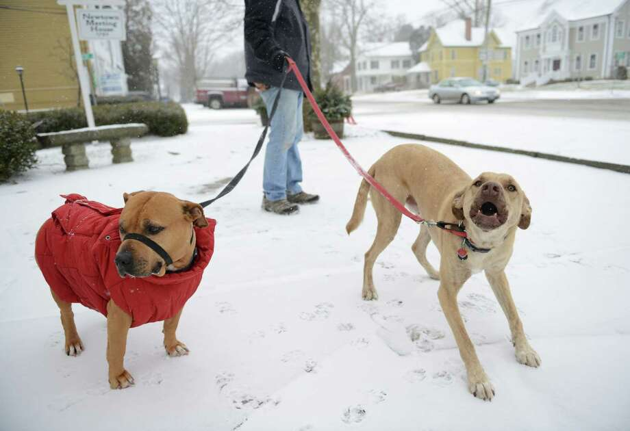 Honey, left, and Henry go for a walk as snow falls along Main Street in Newtown, Conn. Tuesday, Jan. 21, 2014.  The area is expected to get six to 10 inches as the snow continues through Wednesday morning. Photo: Tyler Sizemore / The News-Times