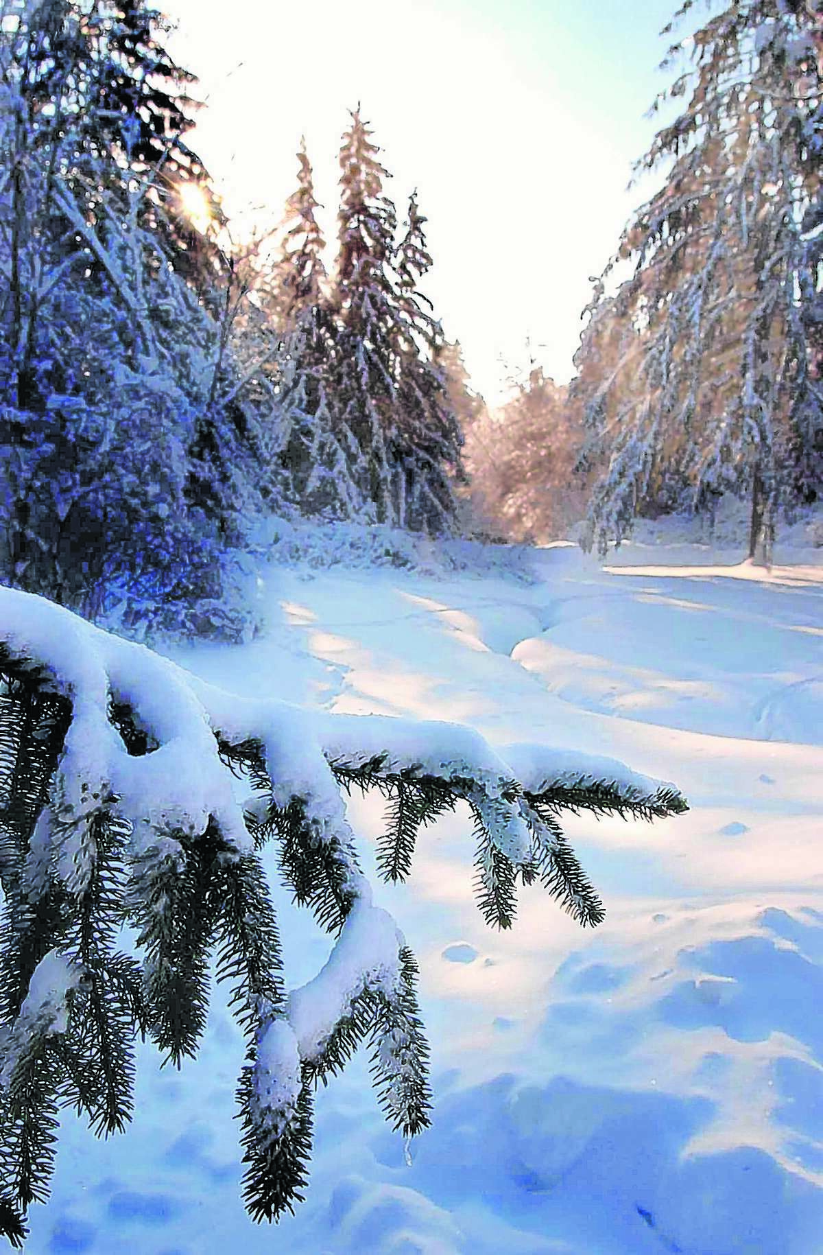 This can be a beautiful site or a depressing one, depending on your point of view. We'll start with a few ways you can enjoy winter outdoors.