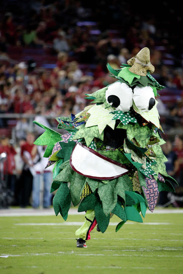 For a school that charges as much as Stanford University does, you'd think they could afford to spend more than $5 on art supplies for their tree mascot. Photo: Stephen Lam, Getty Images / 2013 Getty Images