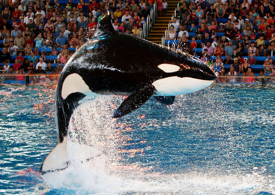 "The documentary ""Blackfish"" focused on SeaWorld and its treatment of killer whales. A reader expresses disappointment with a recent Express-News column that considered the effect of the film. Photo: MARVIN PFEIFFER, Prime Time Newspapers / Prime Time Newspapers 2011"