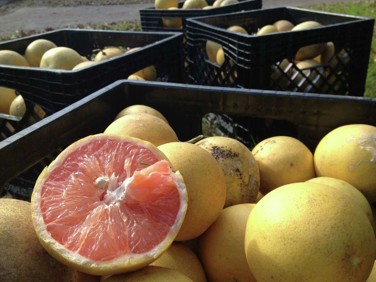 This season, FruitShare Houston has picked more than 3000 pounds of produce. Next year, it hopes to pick 10,000 pounds.