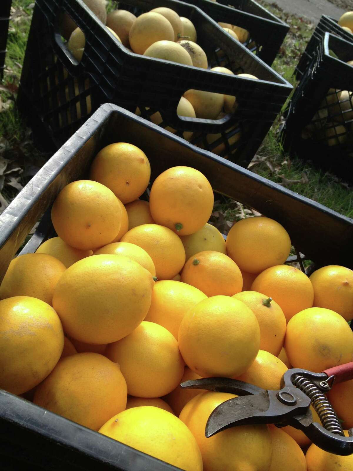 FruitShare provides its produce to Casa Juan Diego for distribution.