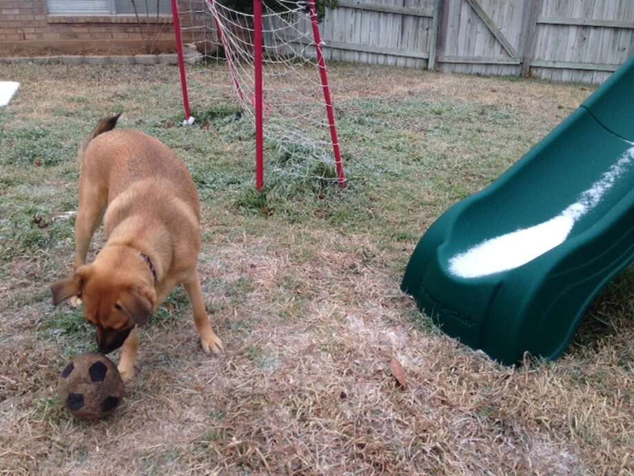 Addie the dog bites an iced soccer ball next to a back yard slide with a line if ice in Stone Oak on Friday morning. Photo: Abe Levy/San Antonio Express-News
