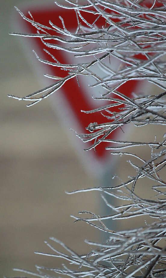 Ice coats tree braches near I-35 and Binz-Engleman Friday January 24, 2014. Photo: JOHN DAVENPORT, SAN ANTONIO EXPRESS-NEWS / ©San Antonio Express-News/Photo may be sold to the public