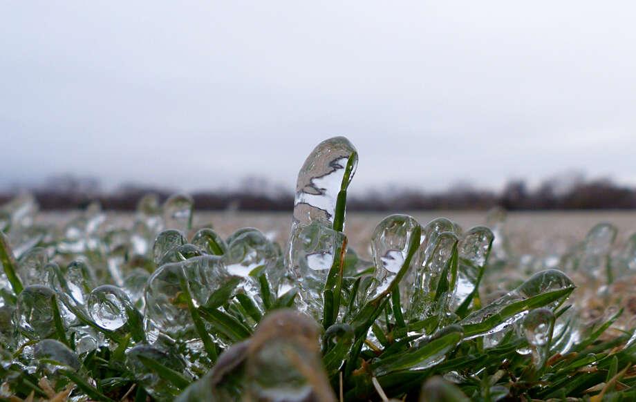 Ice encases blades of grass at Brackenridge Park on Friday, Jan. 24, 2014. Photo: Billy Calzada, San Antonio Express-News / San Antonio Express-News
