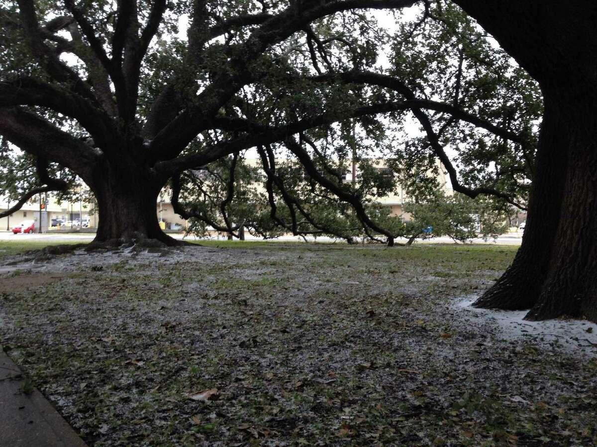 Wiess Park255 Magnolia St. Picnic units (File photo) The live oaks in Wiess Park in downtown Beaumont received a light sprinkling of sleet Thursday morning.