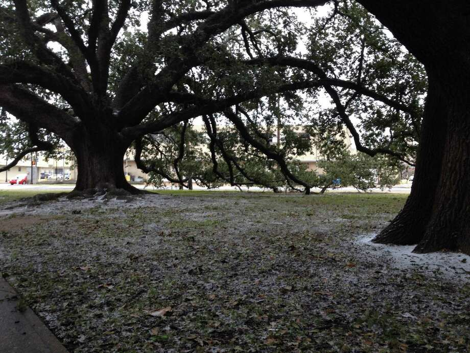 Wiess Park255 Magnolia St.Picnic units(File photo) The live oaks in Wiess Park in downtown Beaumont received a light sprinkling of sleet Thursday morning. Photo: Brooke Crum