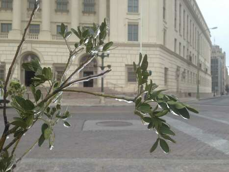 An icy plant outside the Hipolito F. Garcia Federal Building and U.S. Courthouse. Photo: Benjamin Olivo / MySA.com