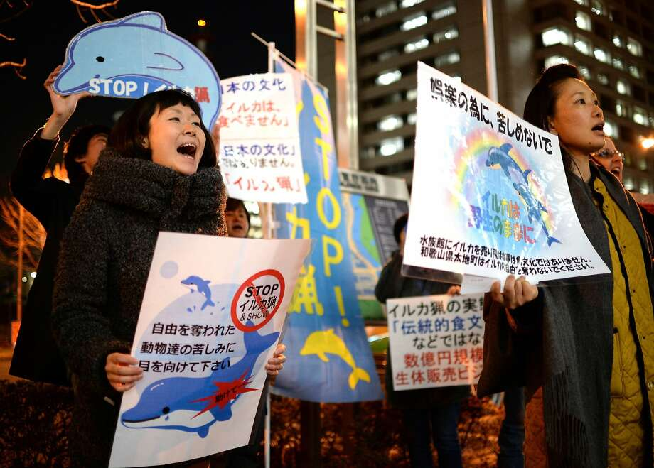 Listen to your people, Japan, and stop killing dolphins: Activists rally in front of Japan's Fisheries Agency in Tokyo to demand that the government halt dolphin hunting. Each year, the marine mammals are caught and either butchered for their meat or sold to aquariums. Photo: Yoshikazu Tsuno, AFP/Getty Images
