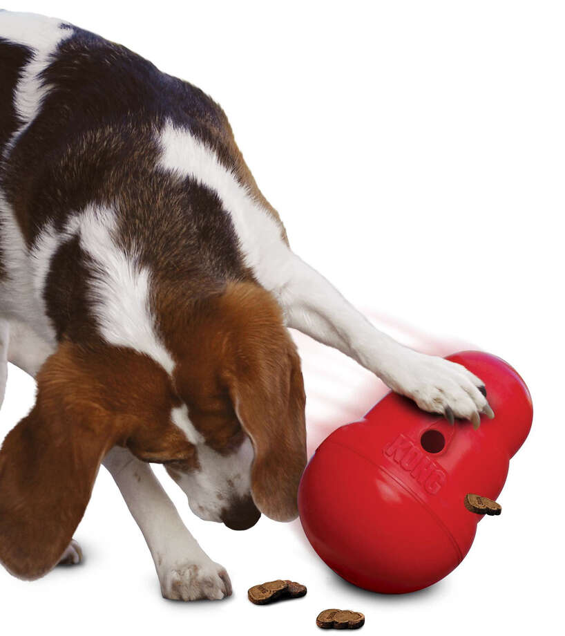A dog plays with a KONG Wobbler pet toy. Photo: KONG