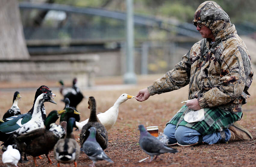 Joe Tarzan tries to stay warm while feeding the ducks and pigeons Friday Jan. 24, 2014 in Brackenridge Park.