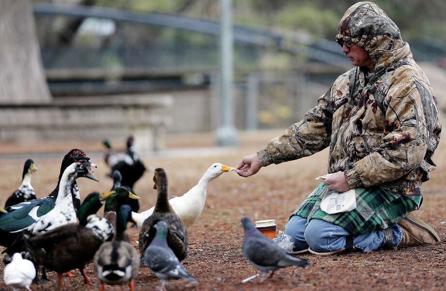 Joe Tarzan tries to stay warm while feeding the ducks and pigeons Friday Jan. 24, 2014 in Brackenridge Park. Photo: Edward A. Ornelas, San Antonio Express-News / © 2014 San Antonio Express-News