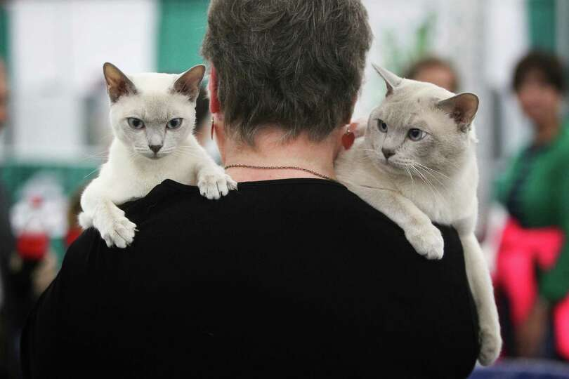 Sheryl Zink carries ' Crystal Lake' and 'Frosty', Tonkinese breed cats, back to their resting place