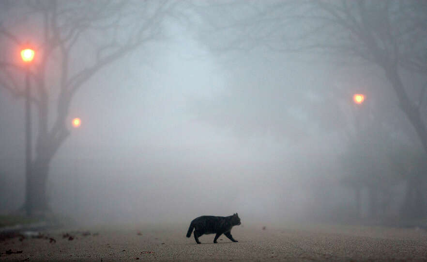 Fog looms as a cat crosses the street Wednesday, Jan. 23, 2013, in Houston.