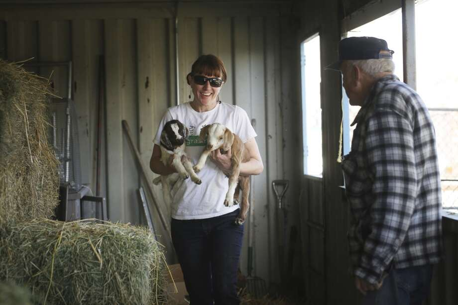 Goat herder at City Grazing Genevieve Church carries two of 25 new baby goats recently born on the facility this past month. Photo: Mike Kepka, The Chronicle