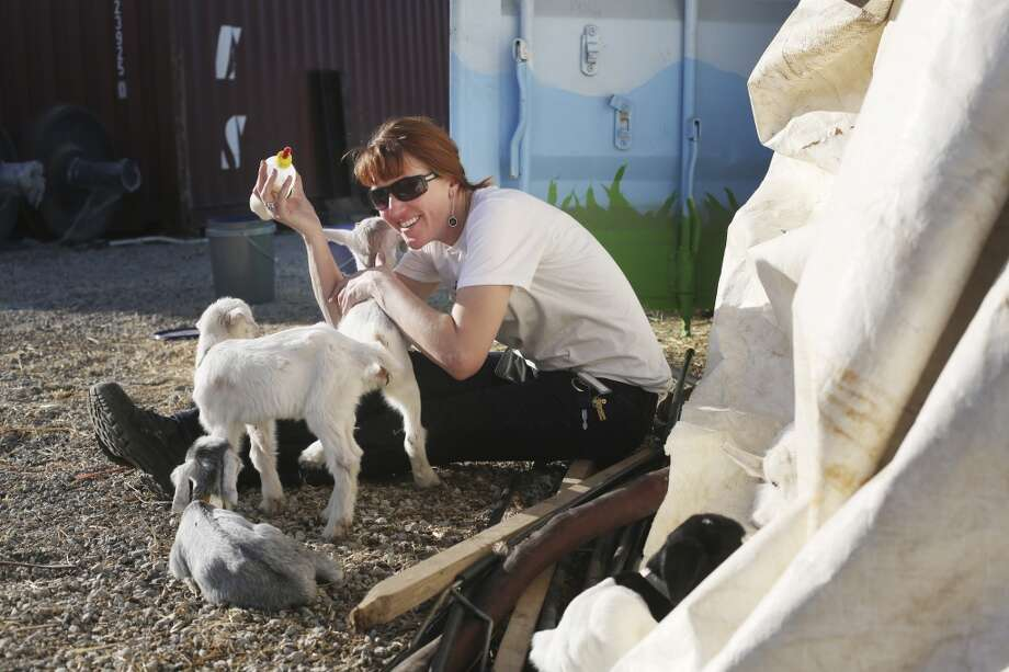 Goat herder at City Grazing Genevieve Church takes care of five baby goats that need extra care. Photo: Mike Kepka, The Chronicle
