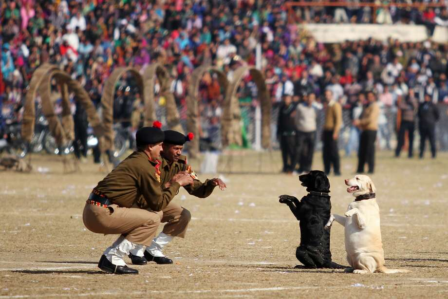 I love making the humans do this: During Republic Day celebrations in Jammu, Indian Border Security Force Dog 