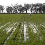 An agricultural worker tends to a field being irrigated with water from the San Joaquin River, near Crows Landing, Calif., on Monday Jan. 27,  2014.
