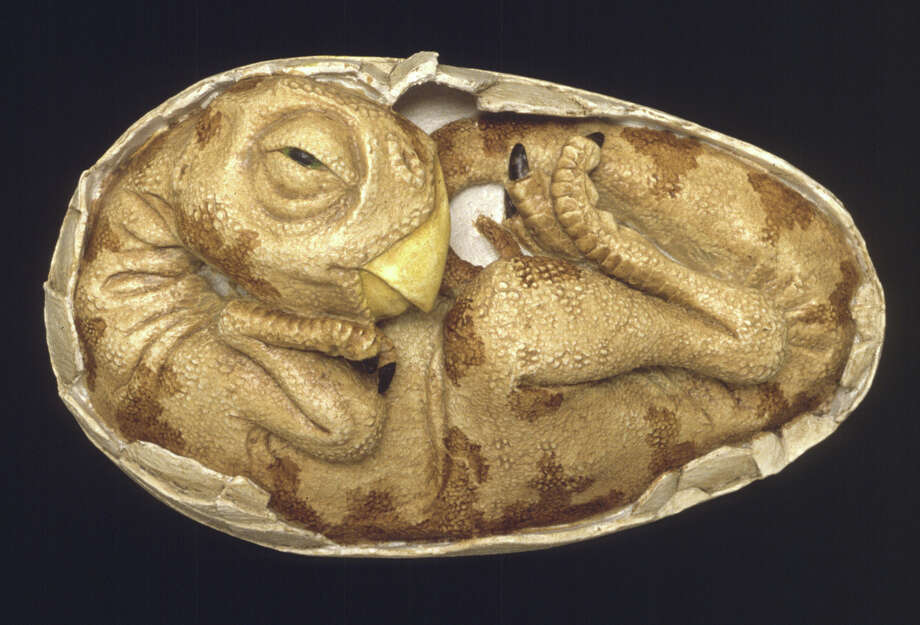 This life-sized model shows the embryo of an oviraptor dinosaur as it may have looked shortly before hatching. Oviraptors were light, fast-moving carnivores with long claws and toothless beaks. The model, created by paleo-sculptor Dennis Wilson, is based on the anatomy of a fossilized oviraptor embryo discovered by paleontologist Mark Norell of the American Museum of Natural History. Photo: Contributed Photo / The News-Times Contributed