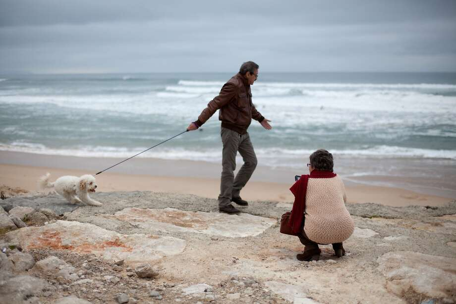 Camera shy: Some dogs simply don't like having their picture taken. (Costa da Caparica beach in Almada, 