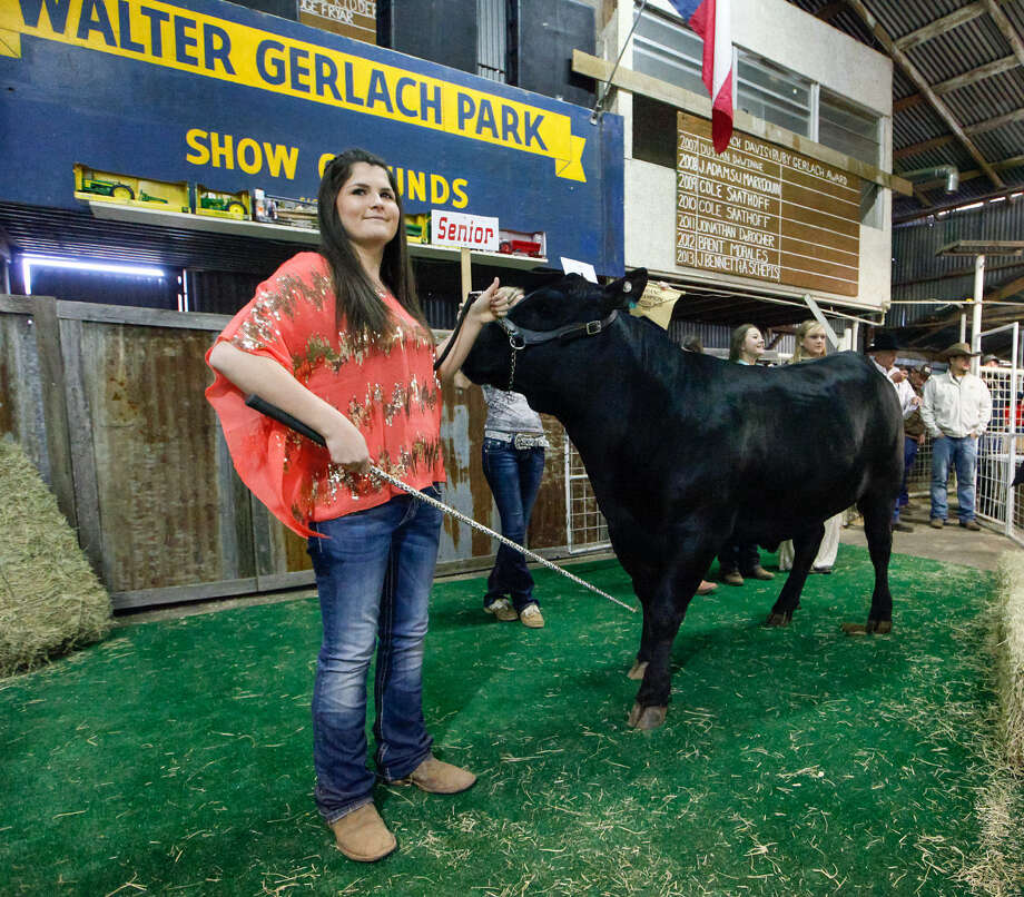 O'Connor senior Courtney Stone, 17, (left) shows her Grand Champion steer Saturday at the Walter Gerlach Livestock Show. She took home $15,000 for her efforts. / Prime Time Newspapers 2014