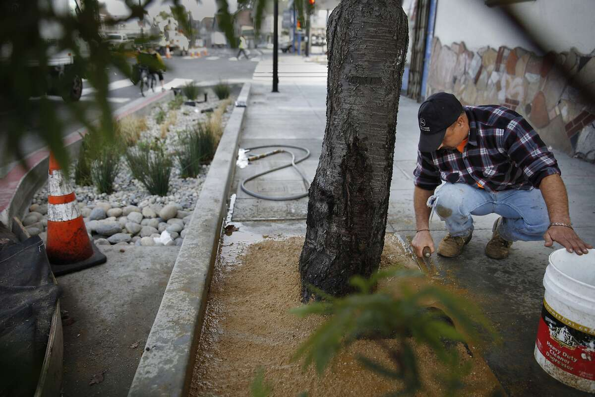 Belman landscaping landscaper, Enrique Joseguera, performs landscaping work near a bulbout on Cesar Chavez Street on Monday, January 27, 2014 in San Francisco, Calif. A ribbon cutting event to mark the completion of the Cesar Chavez Streetscape Project will be held on Wednesday.
