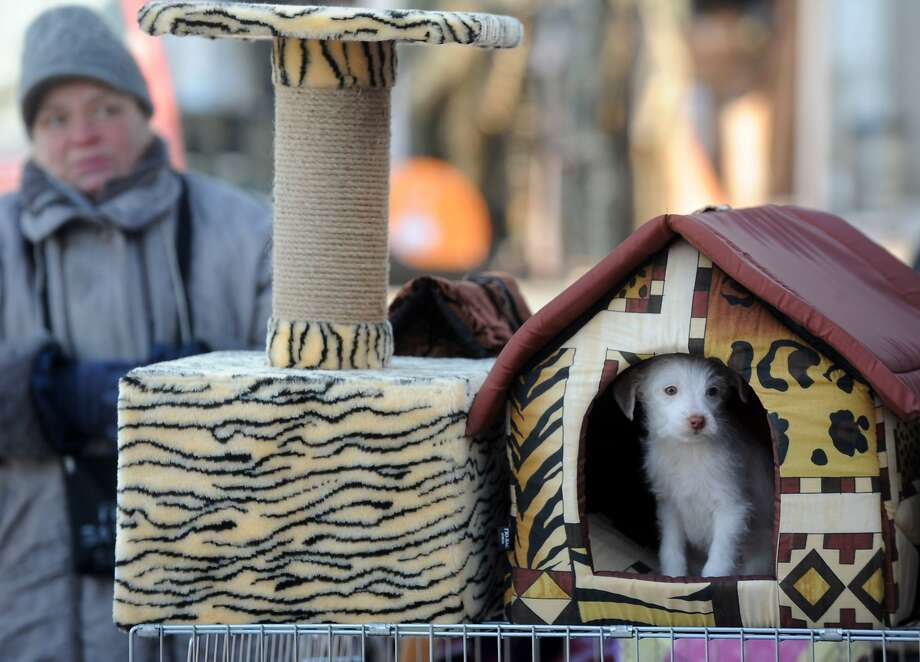 House for sale: A soft doghouse can be purchased at an outdoor market in Minsk. The soft puppy is extra. Photo: Viktor Drachev, AFP/Getty Images