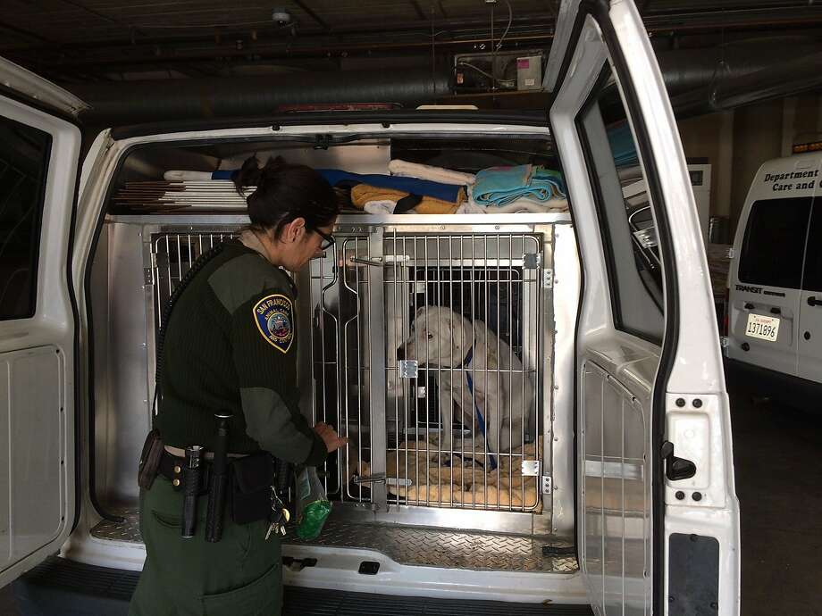 Image result for sf animal care & control van