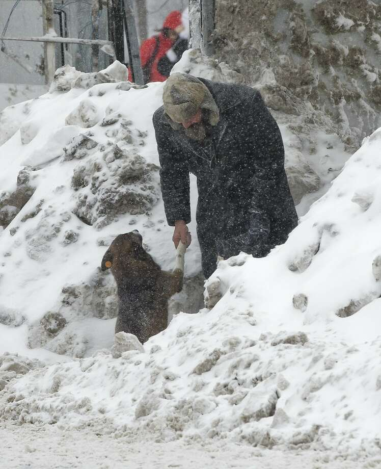 Pleased to meet you: A Romanian man shakes with a stray dog at a snowed-in bus stop in Bucharest. Photo: Vadim Ghirda, Associated Press