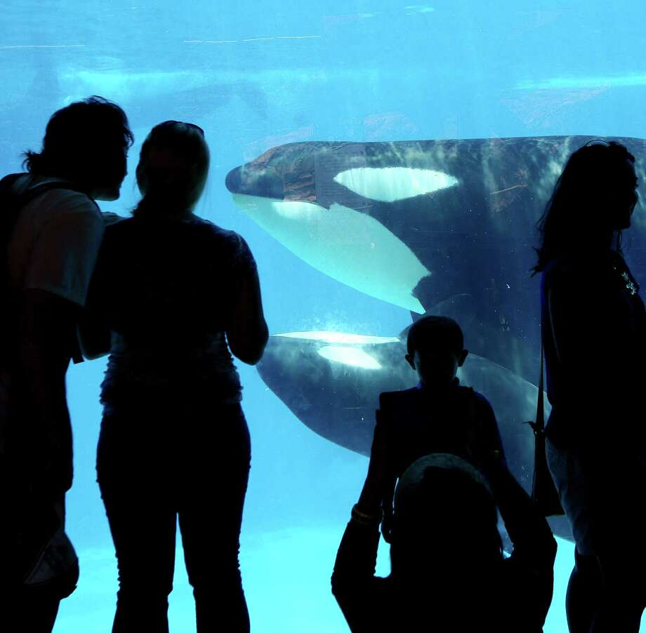 "Visitors view orca whales at SeaWorld San Diego. ""Blackfish"" has found supporters and detractors in its depiction of SeaWorld's treatment of killer whales. Photo: New York Times / NYTNS"