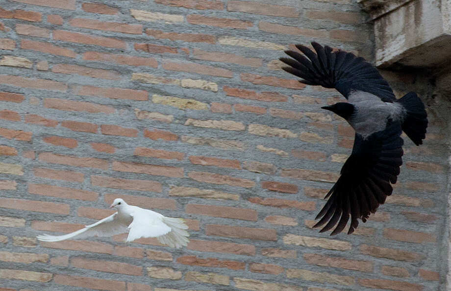 """In this picture taken Sunday, Jan. 26, 2014, a dove which was freed by children with Pope Francis during his Angelus prayer, is attacked by a black crow in St. Peter's Square, at the Vatican. Animal rights groups are appealing to Pope Francis to end a practice of releasing doves over St. Peter's Square, a day after a pair of the peace symbols were attacked by a seagull and crow. The National Animal Protection Agency published an open letter Monday reminding Francis that domesticated doves are easy prey for predators like gulls living in the wild. Gulls nest atop the colonnade of St. Peter's Square, far from natural seaside habitats, but scavenge garbage for food in Rome. The agency said freeing doves in Rome is like """"condemning them to certain death."""" Pro-animal advocate and ex-tourism minister Michela Brambilla told The AP she was confident, Francis, with his """"extraordinary love"""" for all creatures, would reconsider. The Vatican didn't immediately comment on the dove attack. (AP Photo/Gregorio Borgia) Photo: Gregorio Borgia, STF / AP"""