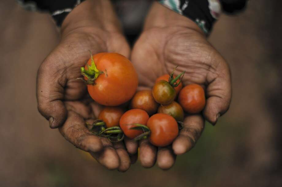 Tomatoes take even less water than lettuce. A pound of tomatoes needs only 24 gallons of water to produce. Photo: MOHD RASFAN, AFP/Getty Images