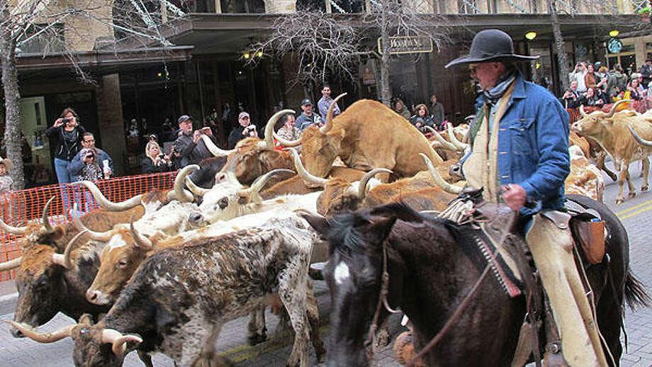 Cows knock hooves in 2009. Photo: Benjamin Olivo, MySA.com