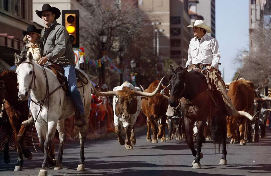 Cowboys on horses lead 35 head of Texas Longhorn cattle down Houston Street in 2009. Ranchers in Africa and Israel are looking at importing the breed because it can withstand harsh weather conditions. Photo: Kin Man Hui, Express-News