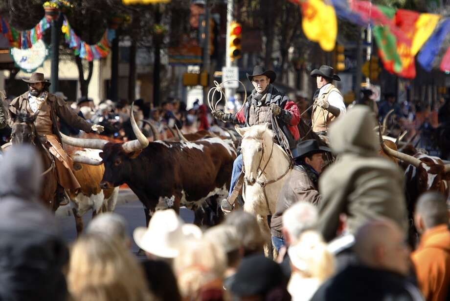 Cowboys guide 40 head of Longhorn cattle down Houston Street in 2010. Photo: Kin Man Hui, Express-News