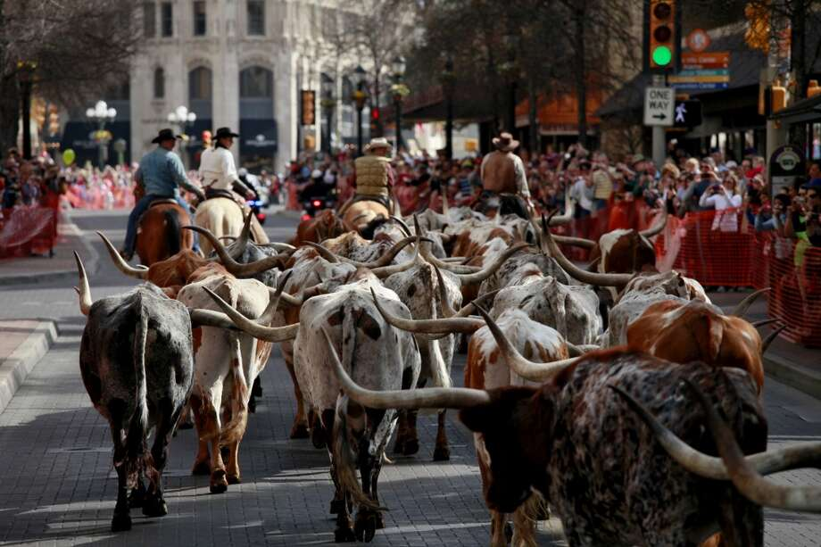 Cowboys lead Longhorns on Houston Street towards the Alamo in 2011. Photo: Lisa Krantz, Express-News