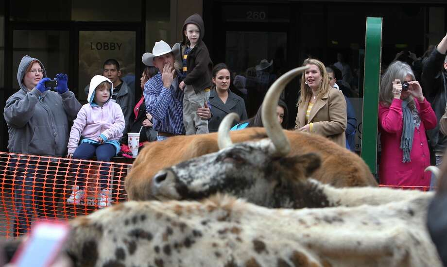 Onlookers watch in amazement at the heads of cattle that moved through downtown San Antonio in 2012. Photo: Kin Man Hui, Express-News