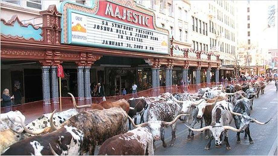 Longhorns pass the Majestic Theatre in 2009. Photo: Benjamin Olivo, MySA.com
